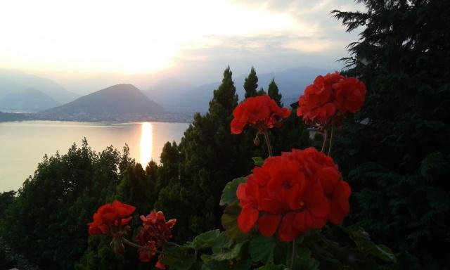 Un fior di tramonto