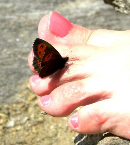 Farfalla... piedofila