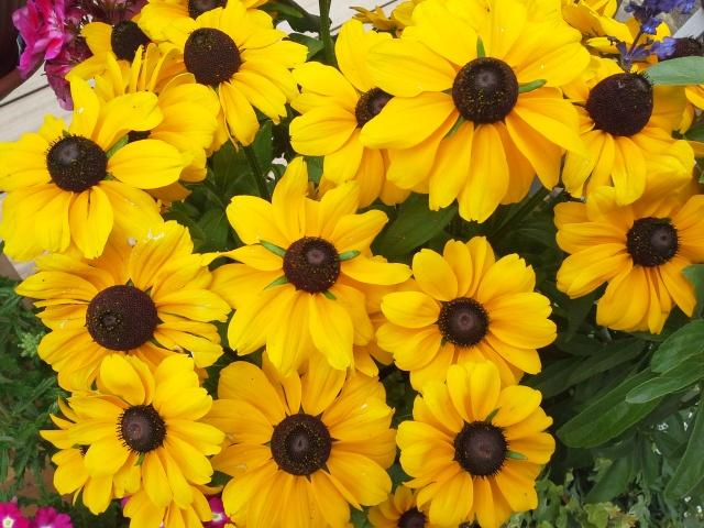 L'estate in fiore