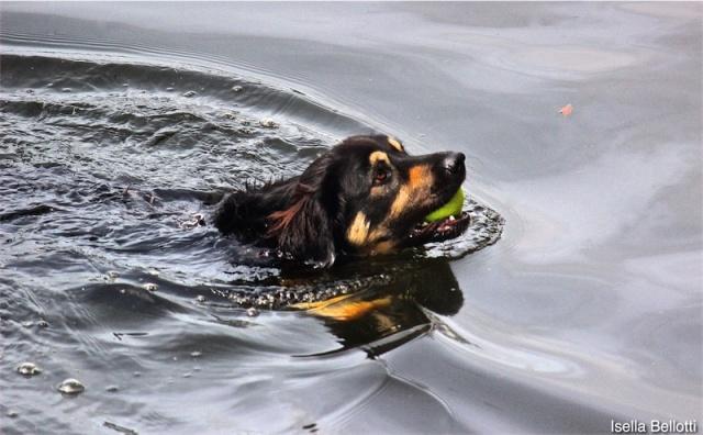Anche i cani amano il lago Maggiore