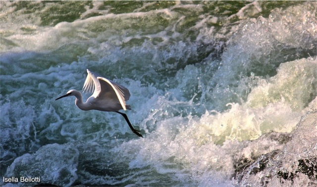 La Garzetta sul fiume Tresa