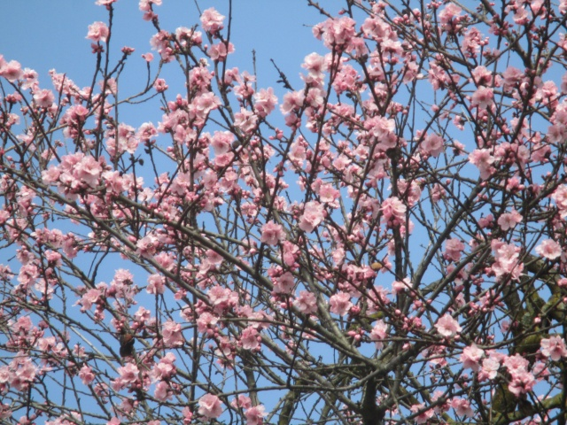 Dopo la neve, la primavera