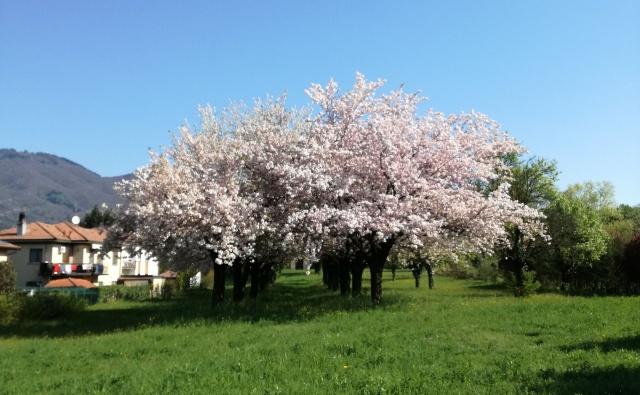 Esplosione di primavera