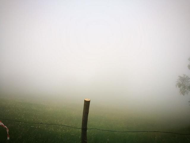 Nebbia in estate