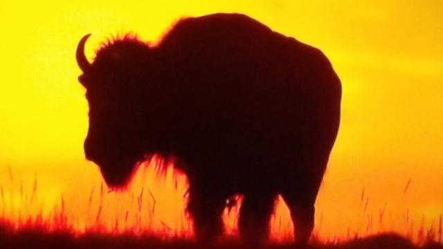 L'ennesima bufala