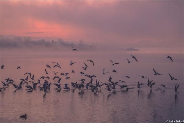 Volo di uccelli all'alba