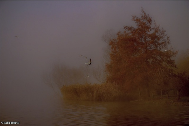 Fantasmagorico lago